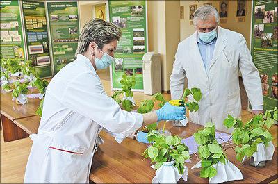 Испытания новых препаратов для защиты леса