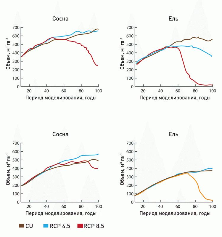 Рис 1. Разница реакций сосны и ели в лесах Архангельской области и Республики Карелия при разных климатических сценариях