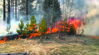 Лесной пожар в Конаковском районе, Тверская область