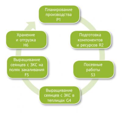 Рис. 4. Производственный цикл этапов выращивания посадочного материала с ЗКС