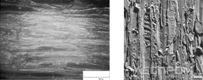 Рис. 8. Контактный слой древесины сосны, обработанной цилиндрической фрезой