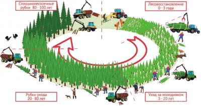 Рис. 1. Цикл интенсивного лесного хозяйства [8]