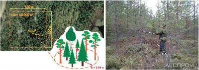 Рис. 6. Контроль количества оставляемых деревьев [8]
