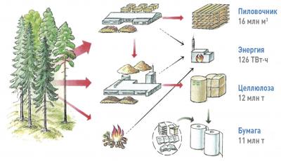 Рис. 1. Структура лесопользования в Швеции