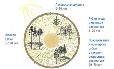 Рис. 2. Лесохозяйственный цикл в Швеции