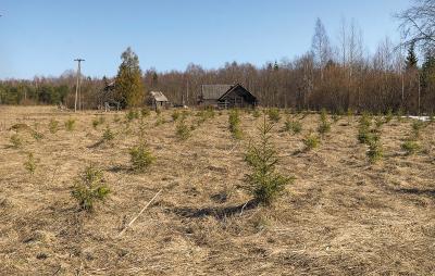 1. Лесоразведение – посадка нового леса на заброшенной, неиспользуемой земле сельскохозяйственного назначения (в Эстонии).