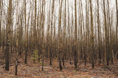4. Типичный результат лесовосстановления без последующего ухода