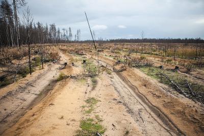 5. Неудачное двойное лесовосстановление: лес посадили, но примерно через 12 лет он сгорел, посадили еще раз, но большинство деревьев погибли из-за некачественной посадки