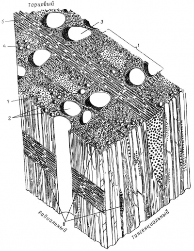 Рис. 1. Схема микроскопического строения древесины дуба: 1 – годичный слой, 2 – сосуды, 3 – крупный сосуд ранней зоны, 4 – мелкий сосуд поздней зоны, 5 – широкий сердцевинный луч, 6 – узкие сердцевинные лучи, 7 – либриформ