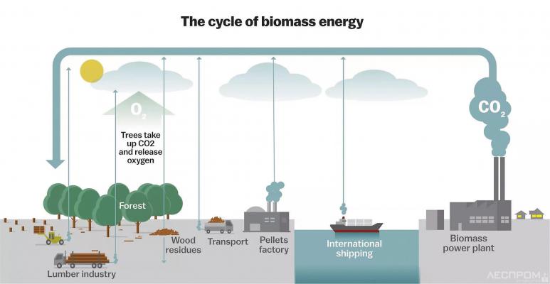Биоэнергетический цикл