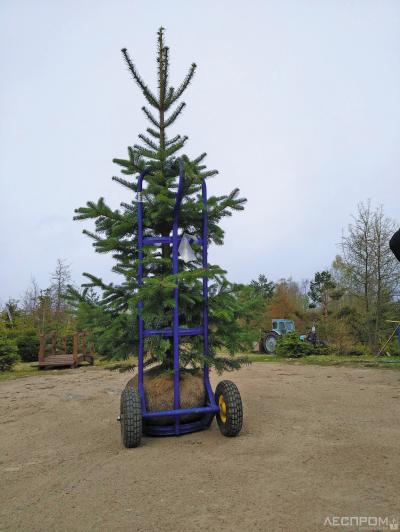 Небольшие деревья перевозят от места выкапывания до места погрузки на ручной тележке