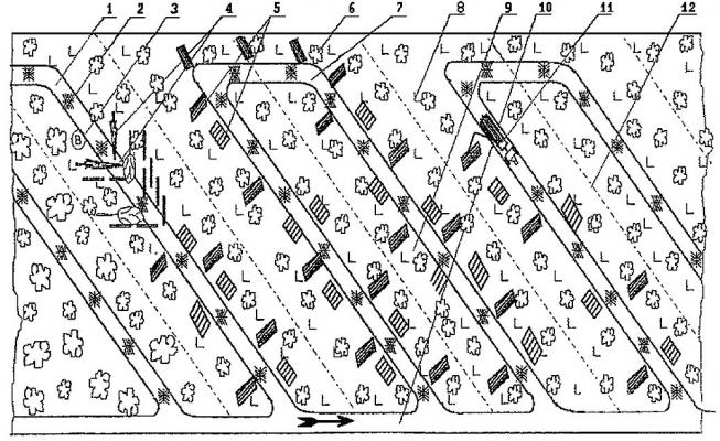Рис. 1. Типовая технологическая схема разработки лесосеки при несплошных рубках леса с использованием бензопил и форвардеров