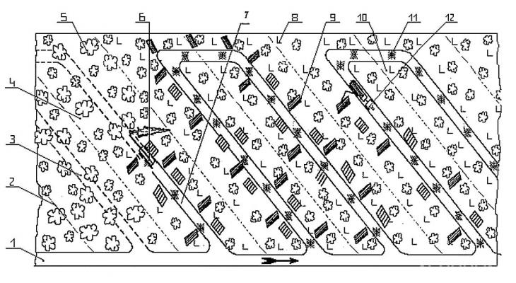 Рис. 5. Типовая технологическая схема разработки лесосеки с использованием харвестера и форвардера