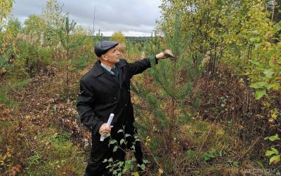 Лесничий Иван Дымов показывает, как выросли сеянцы сосны за шесть лет