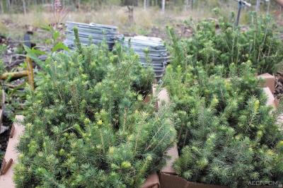 Акция «Сохраним лес – 2020» в Карелии