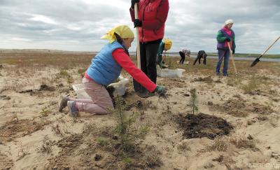Посадки леса на Кузоменских песках