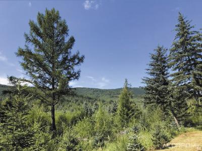 Рис. 3. Восстановление лесных ландшафтов и сохранение защитных функций лесов на экспериментальных участках Муланского лесничества в Китае