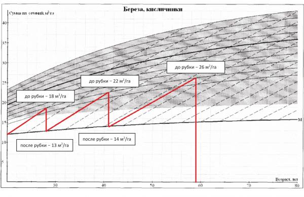 Рис. 4. Вариант программы рубок для березняка (пилотный участок в Вологодской области, возраст насаждения 20 лет)