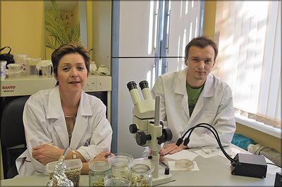 В биолаборатории Ю. А. Сергеевой идет работа над новым,перспективным для Сибири энтомофагом – яйцеедом