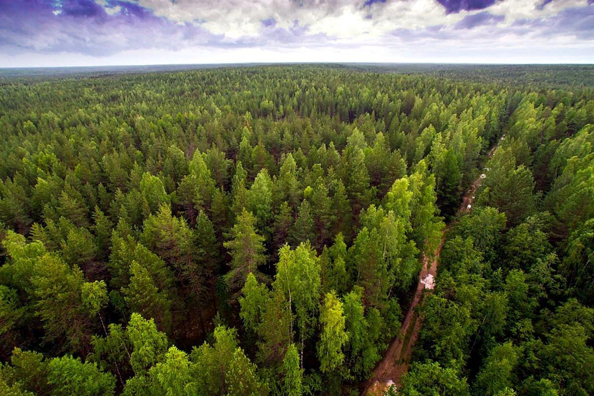 Картинки лесного фона