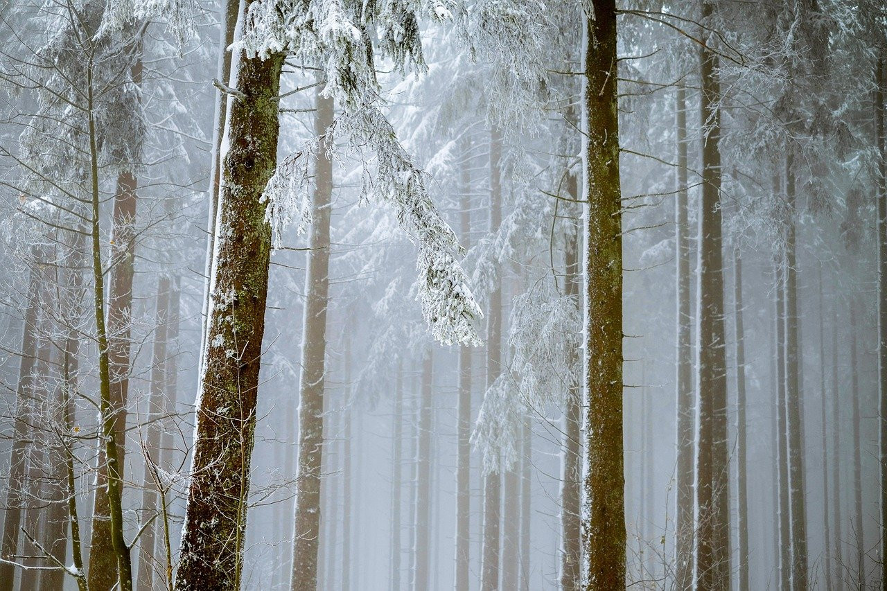 https://lesprominform.ru/media/news/forest_2964073_1280.jpg