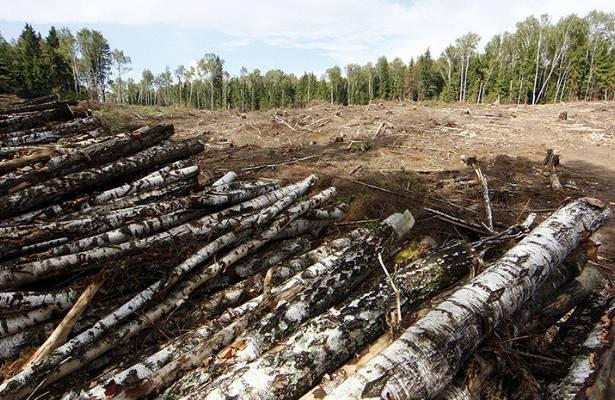 Ущерб от нарушений лесного законодательства в Новгородской области превысил 1,3 миллиарда рублей
