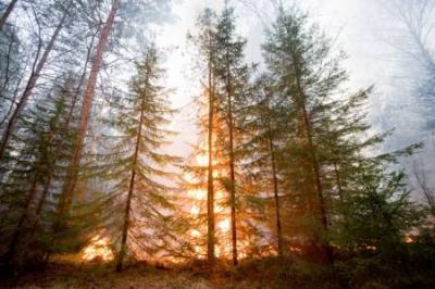 В ХМАО бушуют лесные пожары