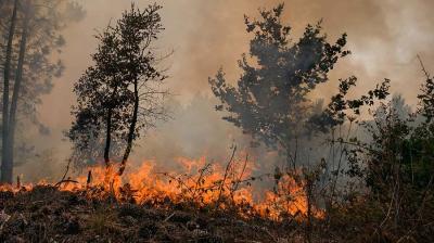 78 тысяч гектаров лесов охвачены лесными пожарами