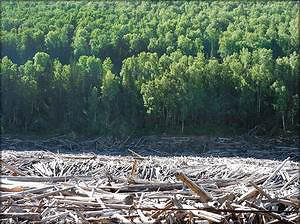 По оценке экспертов, объем ежегодно всплывающей древесины на Богучанском водохранилище составит до 1 млн м3 в год