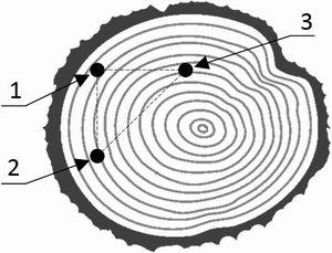 Рис. 2. Пример нанесения точек маркера на поверхность торца бревна