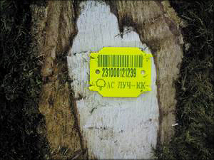 Рис. 9. Маркировочная бирка на дереве, отведенном в рубку