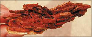 Рис. 9. Вид фрагмента отделенного пробкового слоя при реализации селективной окорки
