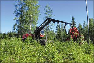 Рис. 1. В ходе машинизированного удаления нежелательной растительности деревья, мешающие росту целевого молодняка, вырывают из земли с корнями