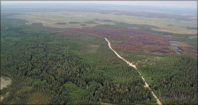 Фото 1. Справа от лесовозной дороги видна гарь антропогенного происхождения (тайга на севере Западной Сибири)