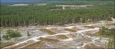Фото 3. Пример качественного проведения лесозаготовительных работ на одной из лесосек FSC-сертифицированного предприятия в Сибири