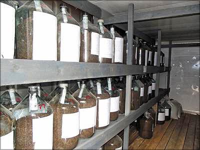 Хранение семян, Лужский селекционный центр