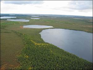 Комбинатские озёра Парабельского и Колпашевского районов