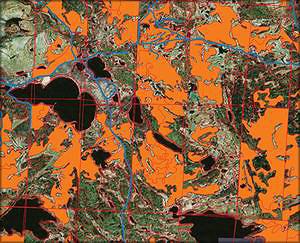 Рис. 1. Визуализация запроса базы данных, демонстрирующего выделы общим объемом более 2000 м3 с долей сосны в насаждениях более 50% (дороги выделены синим)