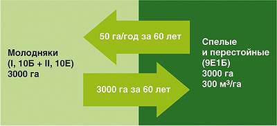 Рис. 1. Расчетная лесосека теоретически обеспечивает соразмерность вырубленных и восстановленных площадей лесов, однако не содержит информации о качестве восстановленных насаждений