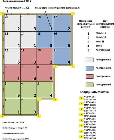Фото 3. Первый опытный участок: сравнение пород и сортов. План участка