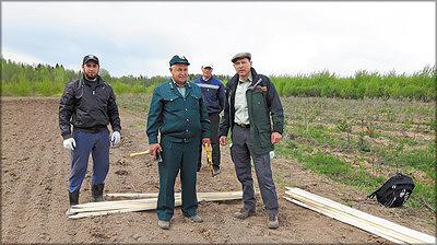 Фото 4. На закладке первых опытных плантаций в мае 2016 года