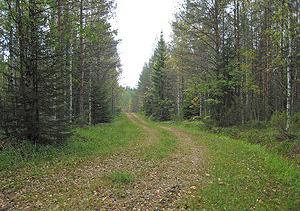 Лесная дорога до и после ремонта