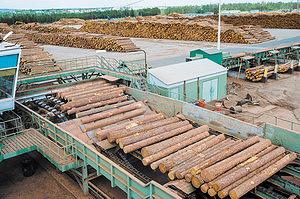 Сортировка круглых лесоматериалов