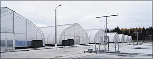 Площадка закаливания саженцев (справа) и теплицы лесопитомника