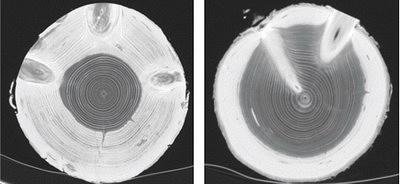 Рис. 11. Оценка внутренней структуры сортиментов, полученная методом КТ