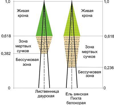 Рис. 3. Геометрические модели распределения качественных зон по длине стволов деревьев по С. П. Исаев