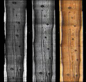Рис. 1. Оценка внешних характеристик древесины