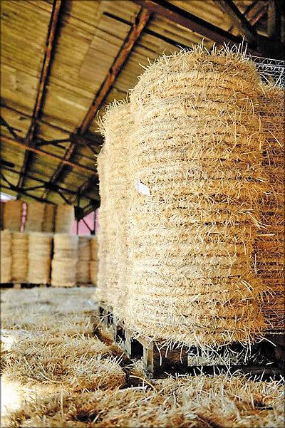 Рис. 6. Канаты из древесной шерсти в бухтах
