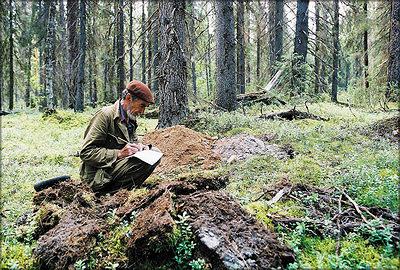Экспедиция по выделению малонарушенных лесов в районе Двинско-Пинежского массива, Архангельская обл., 2006 г.