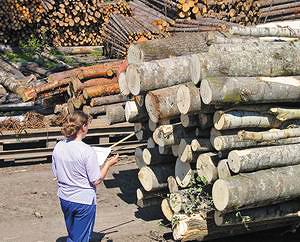 Гостей знакомят с системой учета круглых лесоматериалов